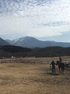 やまなみ牧場の引き馬体験